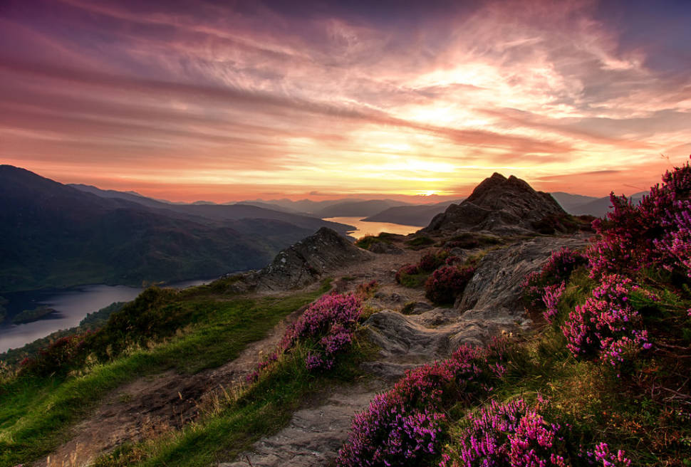 Blooming Heather in Scotland - Best Time