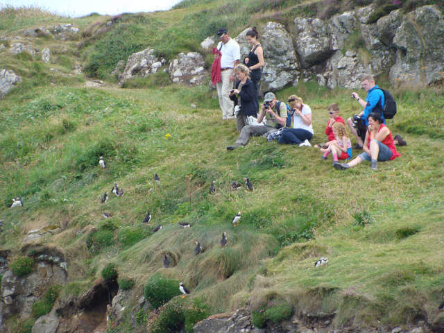 Watching puffins on Staffa Island