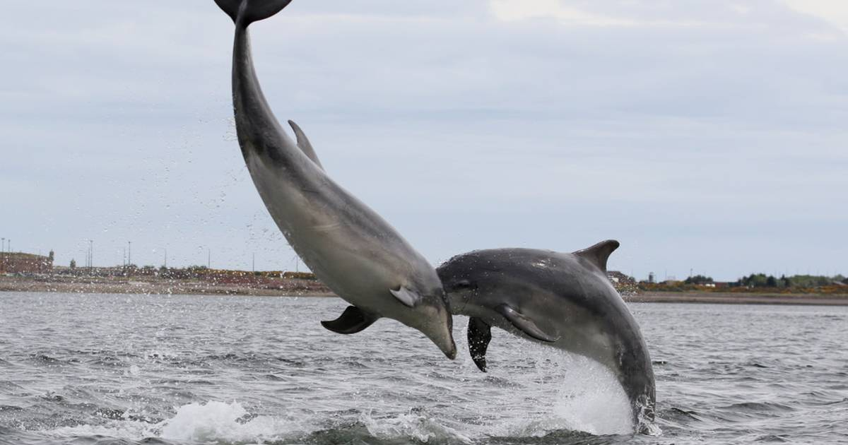 Dolphin and Whale Watching in Scotland - Best Time