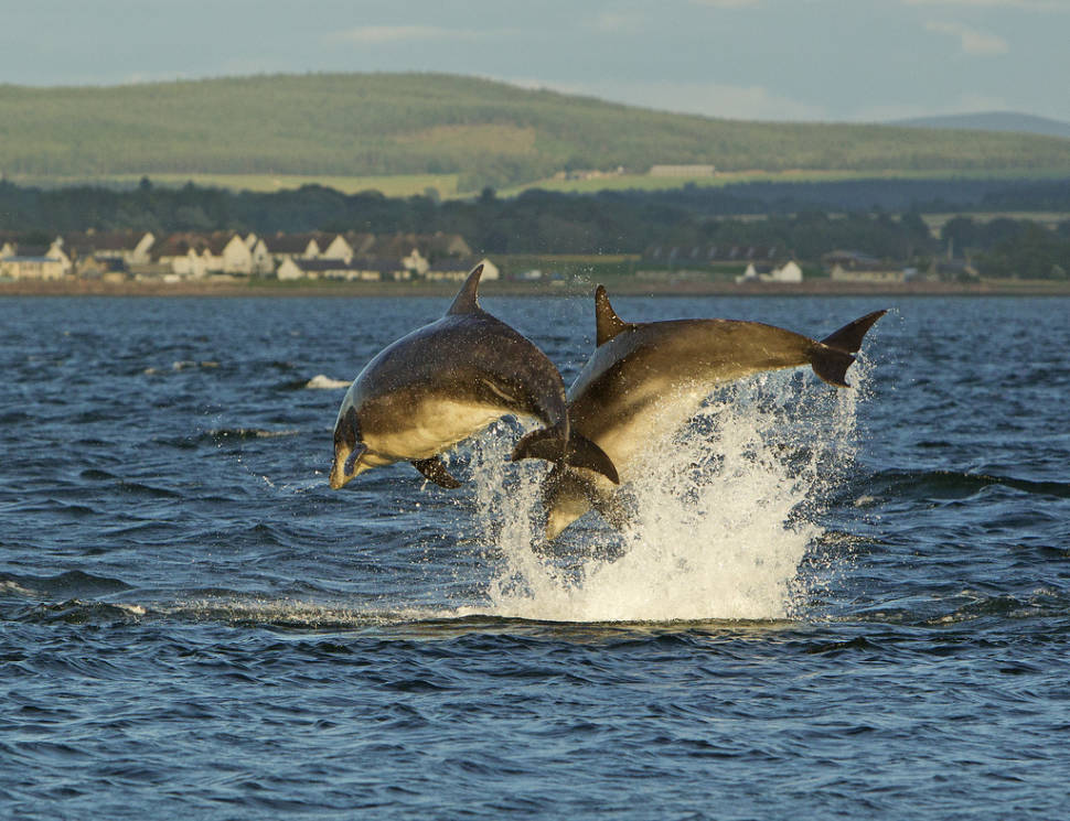 Sunset dolphins at Fort George