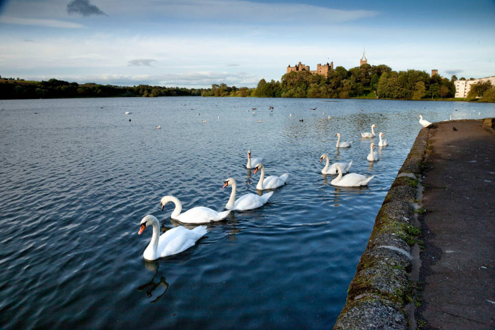 View across Linlithgow Loch to the Palace and St Michael's Parish Church at Linlithgow, a historic Royal Burgh in West Lothian