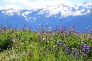Wildflowers Bloom
