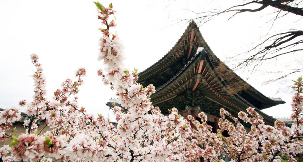 Spring in Seoul - Best Time