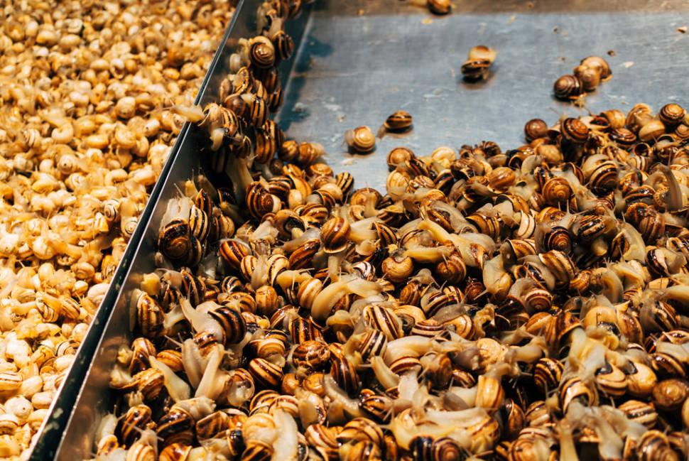 Caracoles or Snails in Seville - Best Time