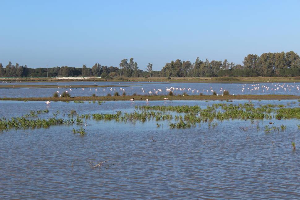 Flamingos in Doñana National Park