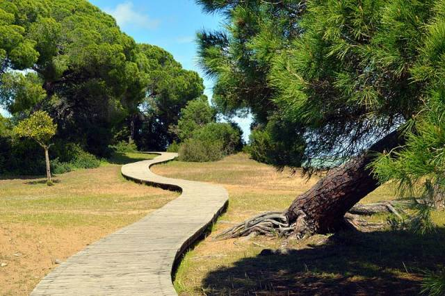 Doñana National Park in Seville - Best Time