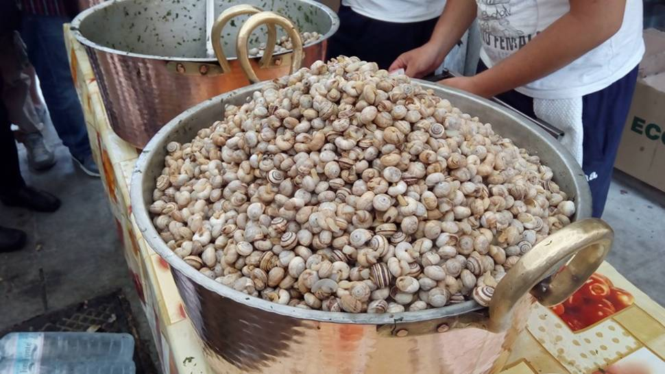 Snails or Babbaluci in Sicily - Best Time