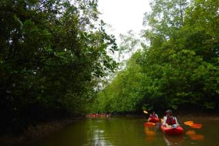 Kayak Through a Mangrove Forest