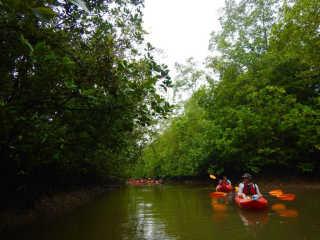 Kayak Through a Mangrove Forest