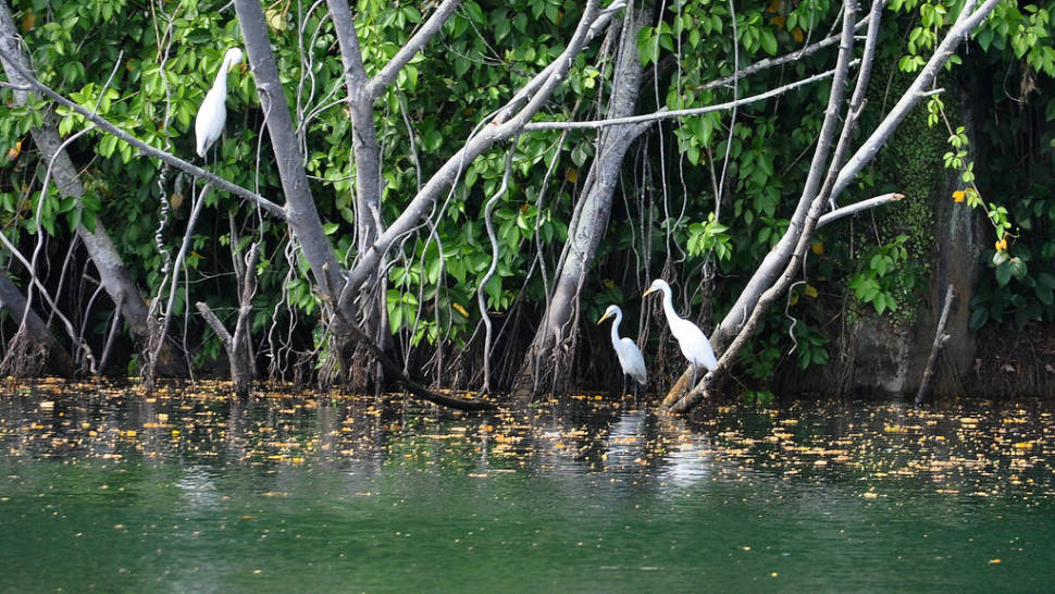 Kayak Through a Mangrove Forest in Singapore - Best Season