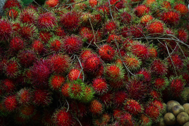Rambutan in Singapore - Best Season