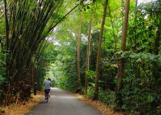 Ride Bikes on Pulau Ubin
