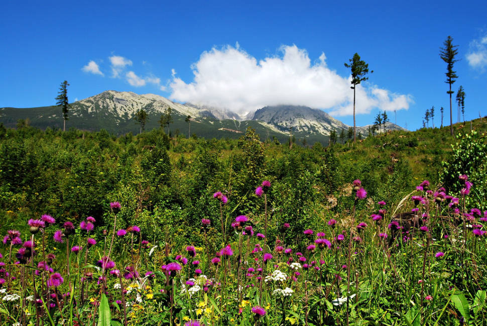 Best time for Wildflower Bloom in the High Tatras in Slovakia