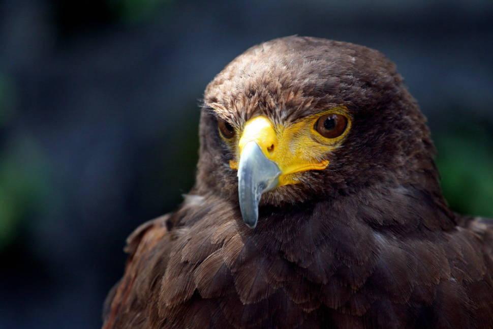 Birdwatching in Slovenia - Best Time
