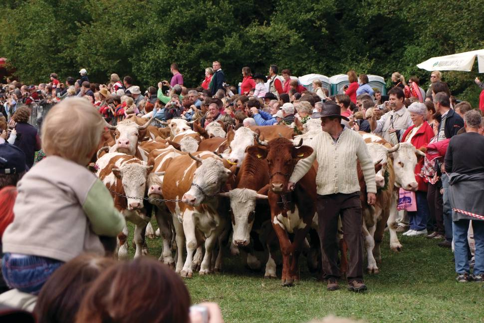 Best time for Cow Ball in Slovenia
