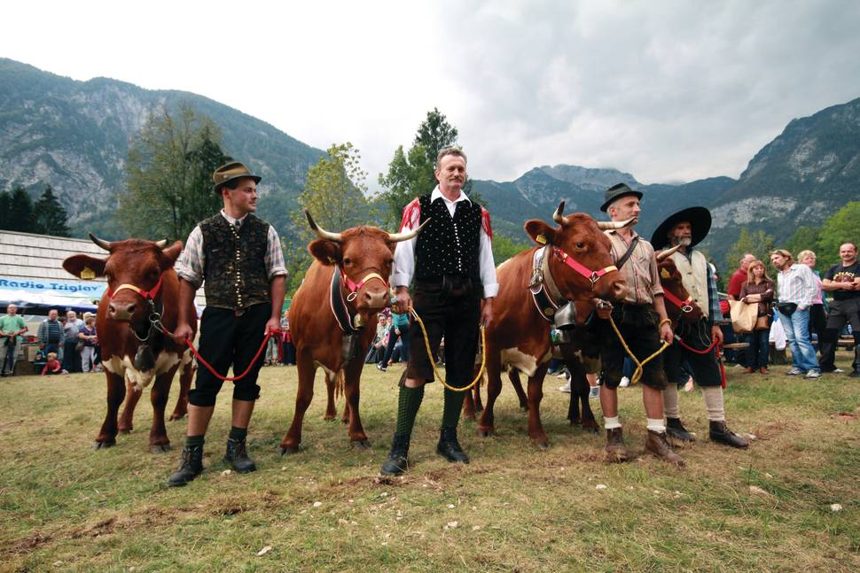 Cow Ball in Slovenia - Best Time