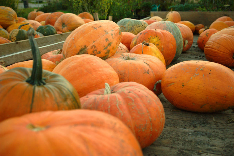 Pumpkin Season in Slovenia - Best Time