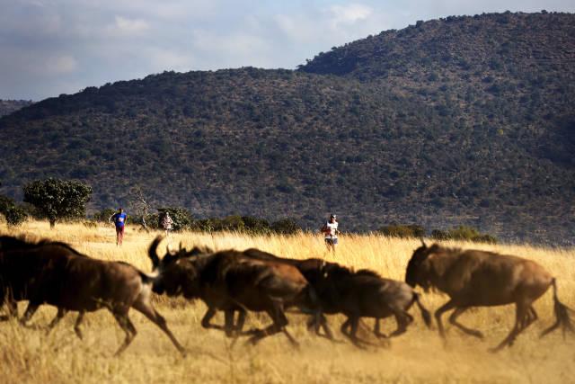 Big Five Marathon in South Africa - Best Season