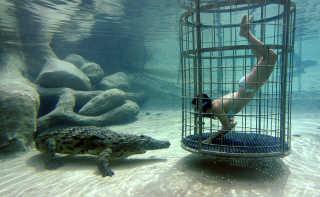 Croc Cage Diving