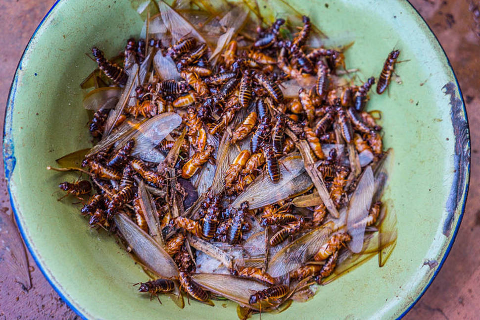 Roasted Termites in South Africa - Best Season