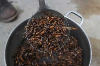 Roasted Termites
