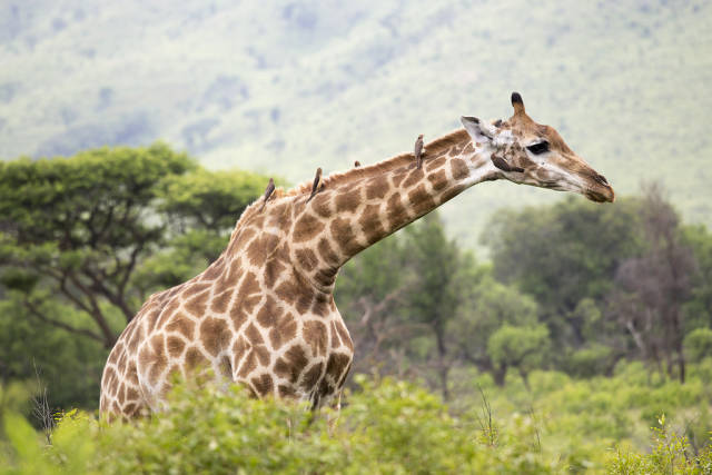 Safari in South Africa - Best Time