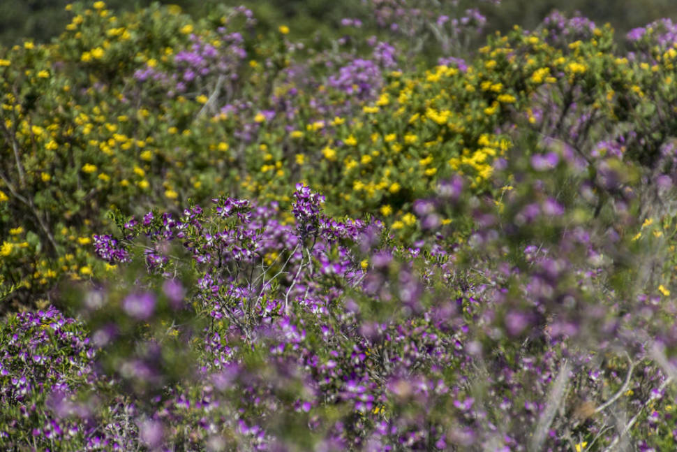 West Coast Wildflowers in South Africa - Best Season