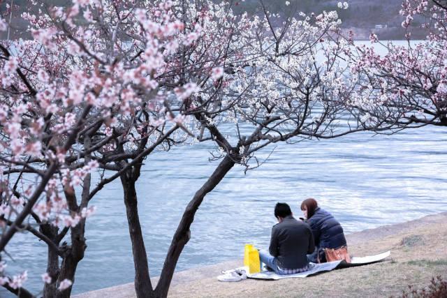 Cherry Blossom near Bomunho Lake
