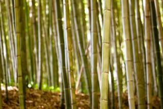 Damyang Bamboo Festival
