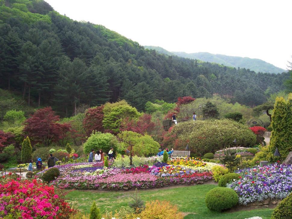 Flowers in the Garden of Morning Calm in South Korea - Best Season