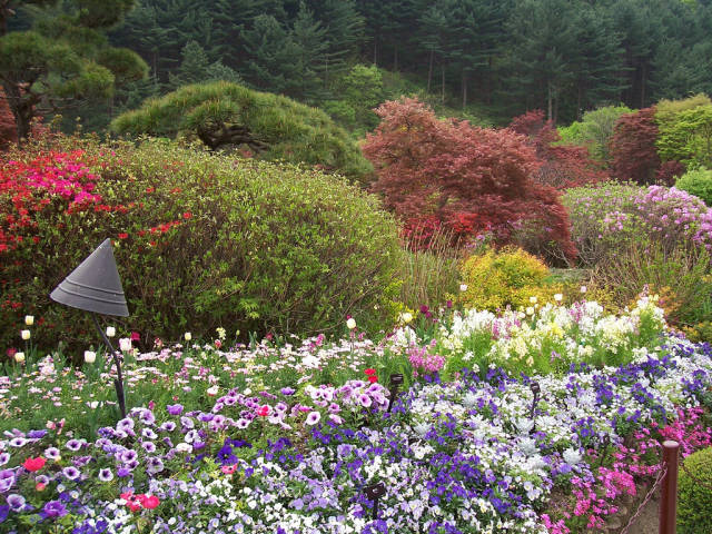 Flowers in the Garden of Morning Calm in South Korea - Best Time