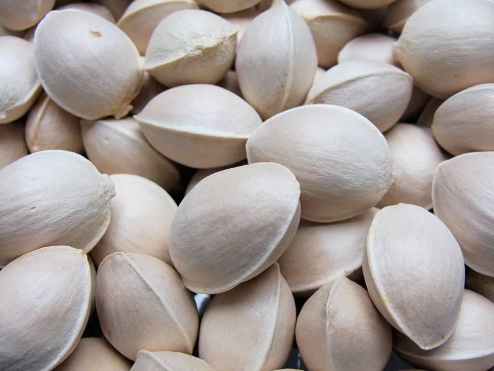 Ginkgo Nuts in South Korea - Best Time