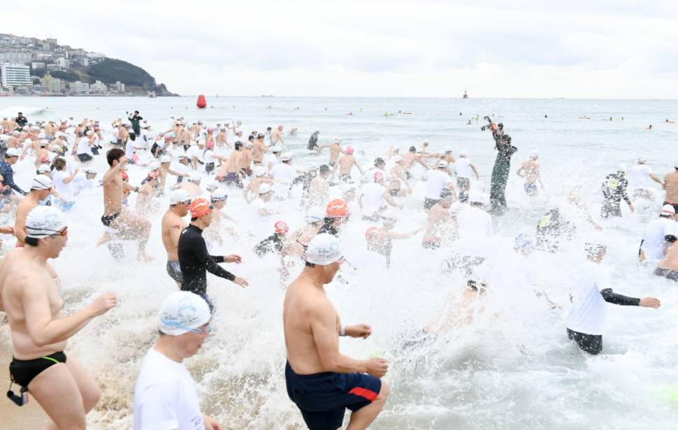 Best time to see Polar Bear Swim Festival in South Korea