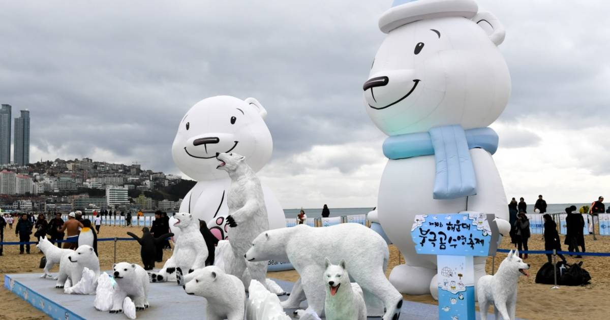 Polar Bear Swim Festival in South Korea - Best Time