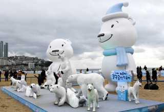 Polar Bear Swim Festival