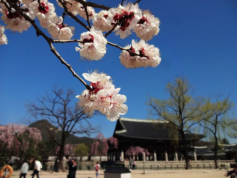 Spring in South Korea - Best Season