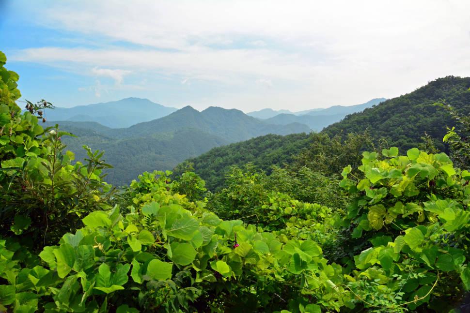 Korean Mountain Range