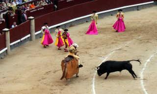 Bullfighting Season