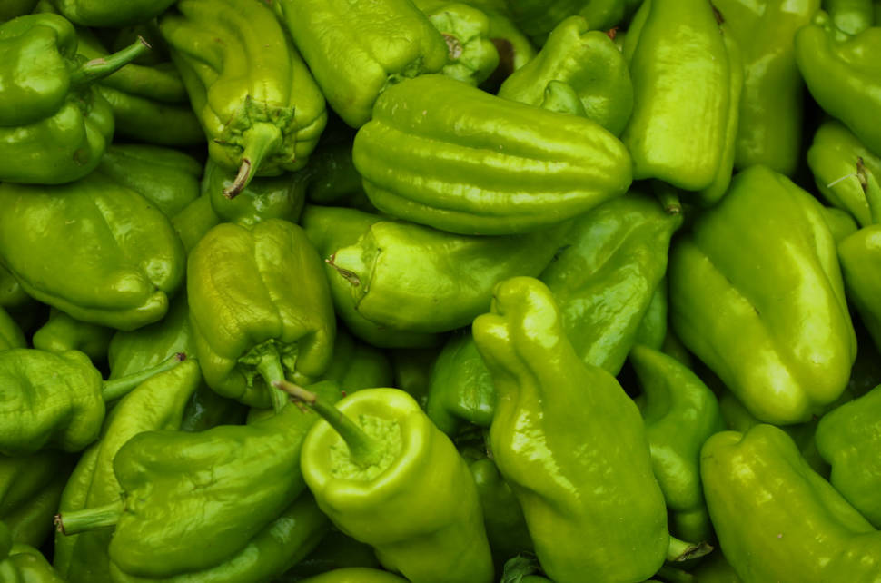 Padrón Peppers (Pimientos de Padrón) in Spain - Best Season