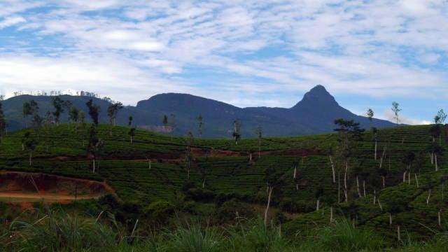 Adam's Peak Pilgrimage in Sri Lanka - Best Season