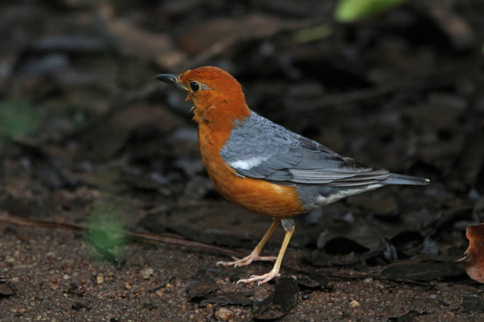 Best time for Bird Watching in Sri Lanka