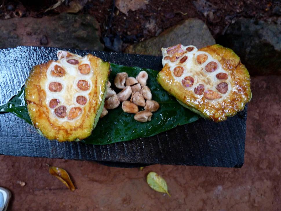 Cocoa in Sri Lanka - Best Time