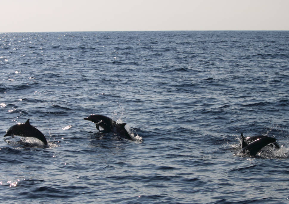 Dolphins Watching in Sri Lanka - Best Season