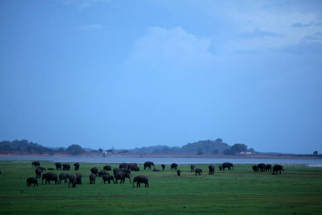 Best time for Elephant Gathering in Sri Lanka