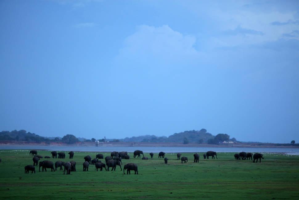Best time for Elephant Gathering in Sri Lanka