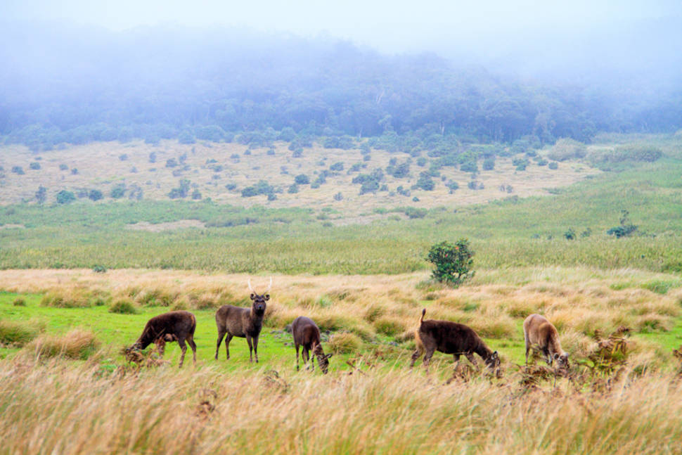 Best time for Horton Plains in Sri Lanka