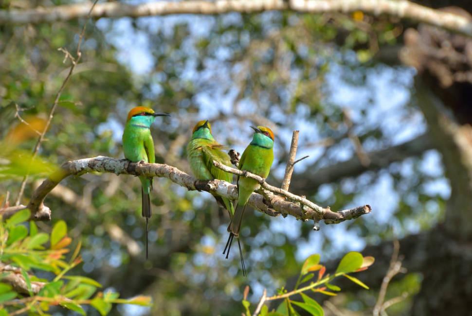 National Bird Watching Month in Sri Lanka - Best Time
