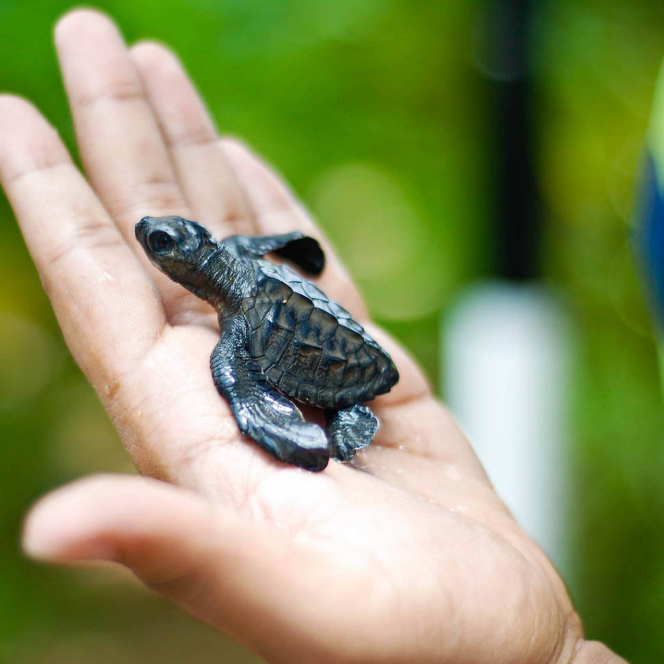 Best time for Turtle Watching in Sri Lanka