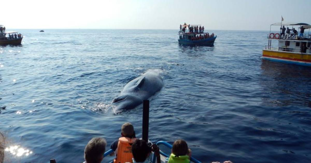 Whale Watching in Sri Lanka - Best Time