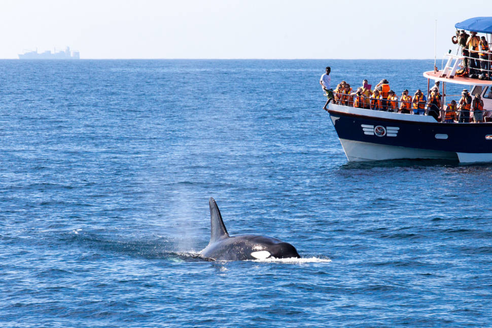 Whale watching off the southern coast